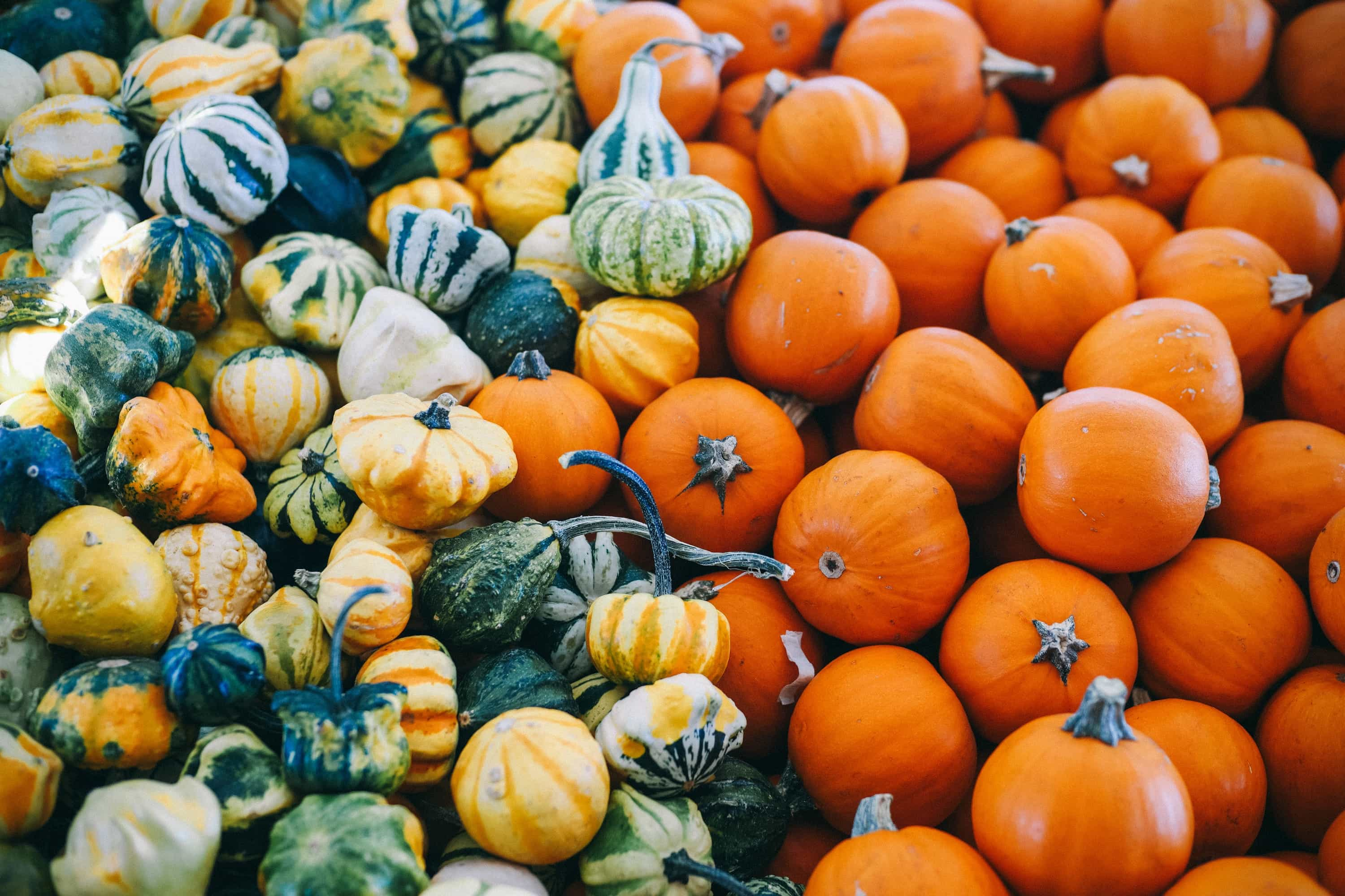 Pumpkins and gourds outside